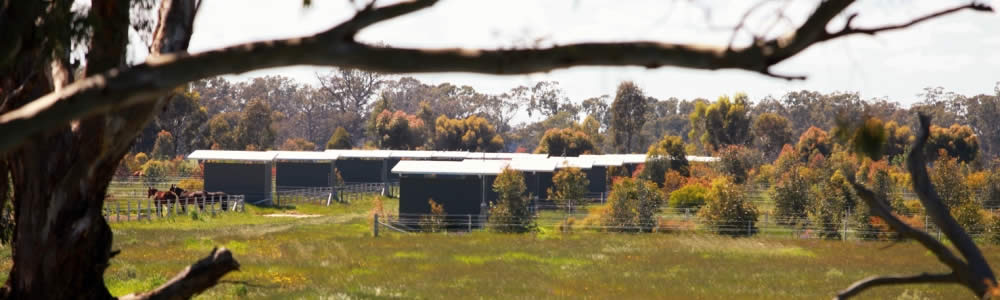 A safe environment with individual service for all horses